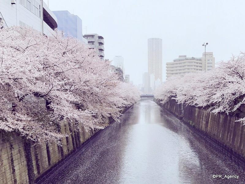 春の「目黒川」