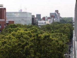 16「表参道ヒルズゼルコバテラス」バルコニーからの眺望(取材協力:森ビル))